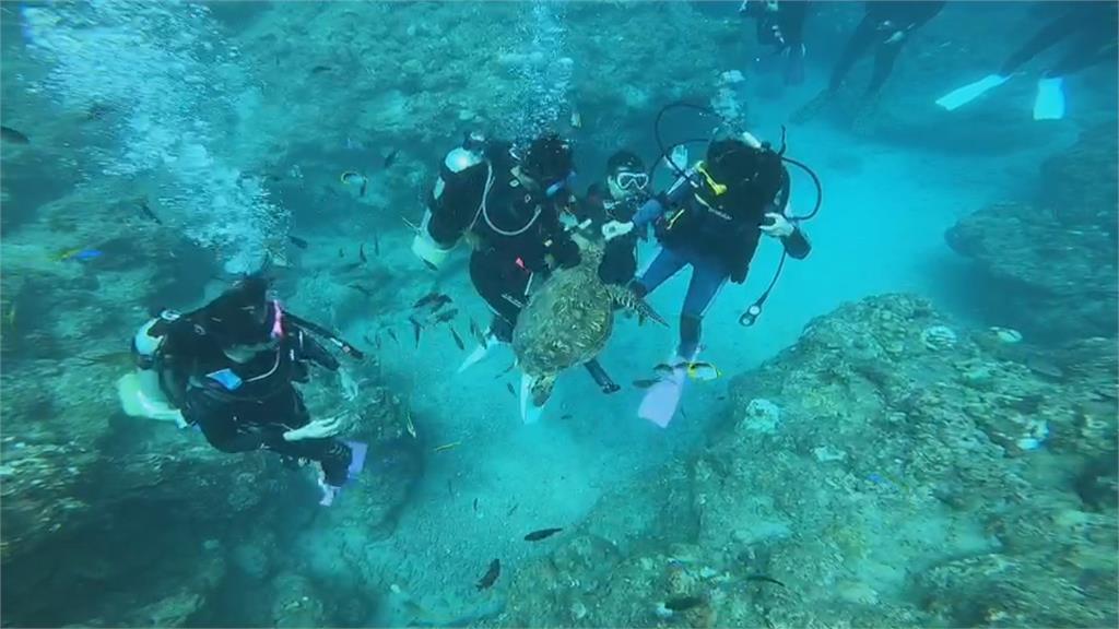 小琉球潛水客餵食海龜 函送偵辦一度辯稱秋刀魚餵魚群 海龜被吸引來