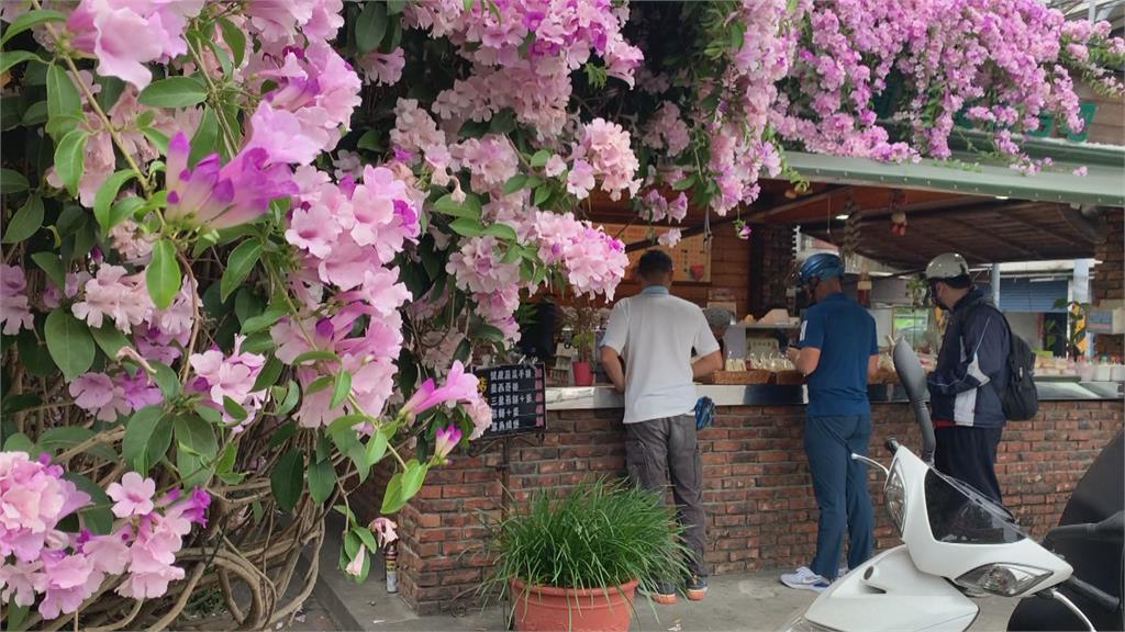 雲林最美早餐店!紫藤花攀附屋簷形成花牆超美吸睛