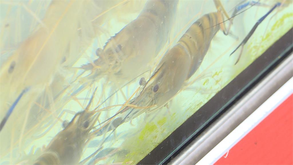 流水蝦吃到飽紅極一時!去年台中狂開14間店  收攤剩2間  業者分析:成本負擔太大