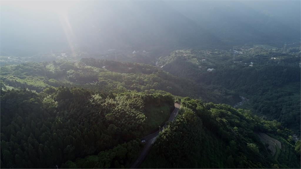 台灣沿岸打造綠色屏障 林務局盼造林延續生機