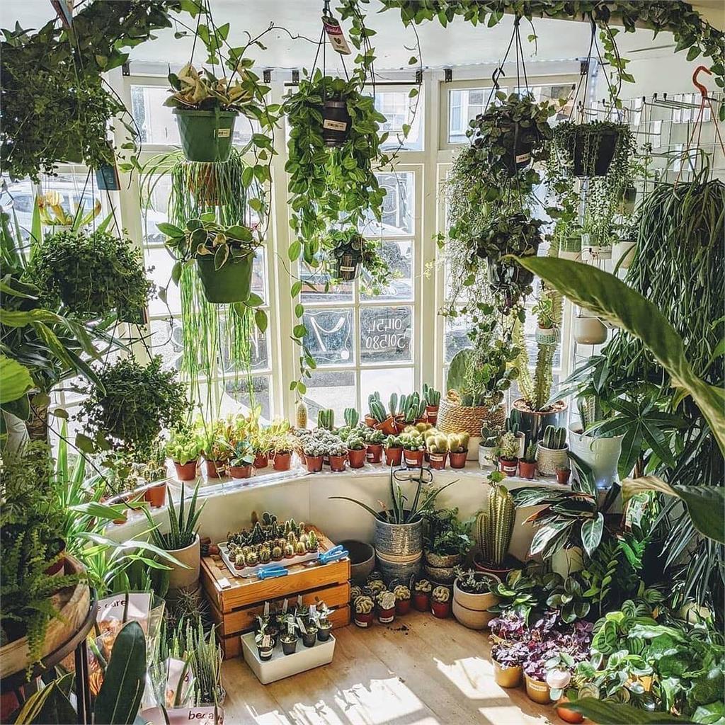 太多植物陽台塞不下?超實用收納學起來 新年再爆買一波