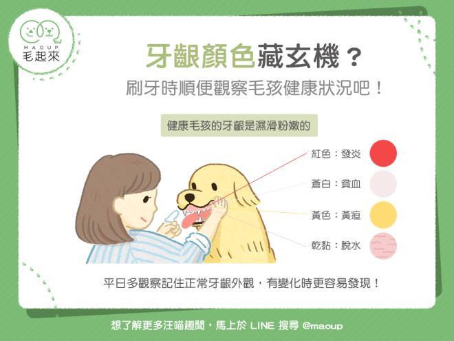 【狗貓健康】貓狗的牙齦顏色跟健康狀況有關?刷牙時順便做個檢查吧!|寵物愛很大
