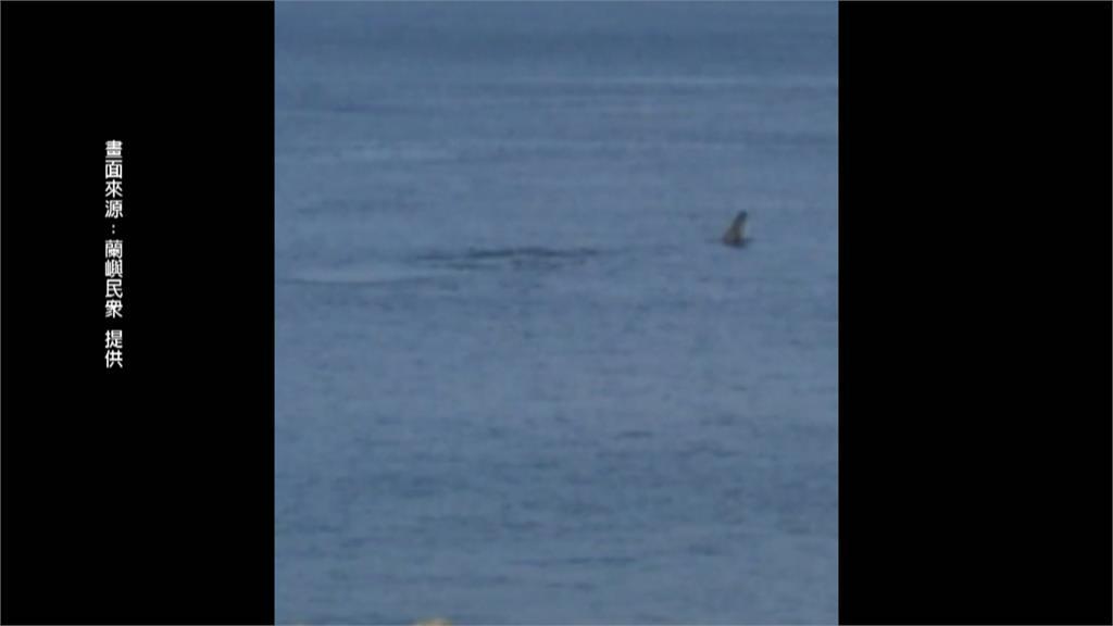 台灣罕見「大翅鯨」現蹤蘭嶼 母子齊游噴水柱