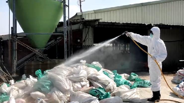 快新聞/嘉義縣肉鵝場出現禽流感 防治所撲殺918隻鵝