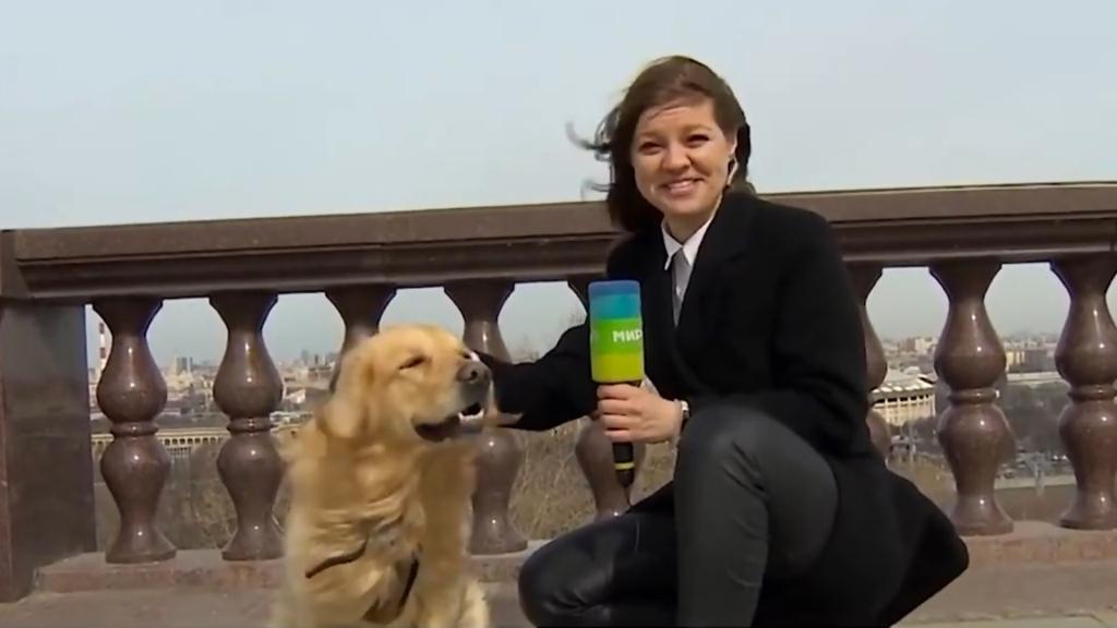 影/女記者直播期間被襲 「神偷」狗狗一口咬走麥克風