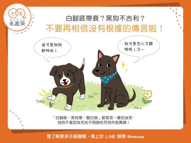【迷思大破解】白腳底帶衰?黑狗不吉利?這都是沒根據的傳言!|寵物愛很大