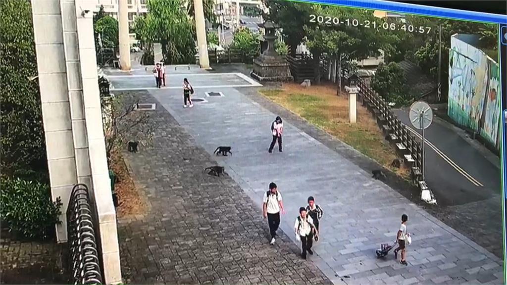 太扯! 獼猴群入侵校園 圍堵學生搶早餐