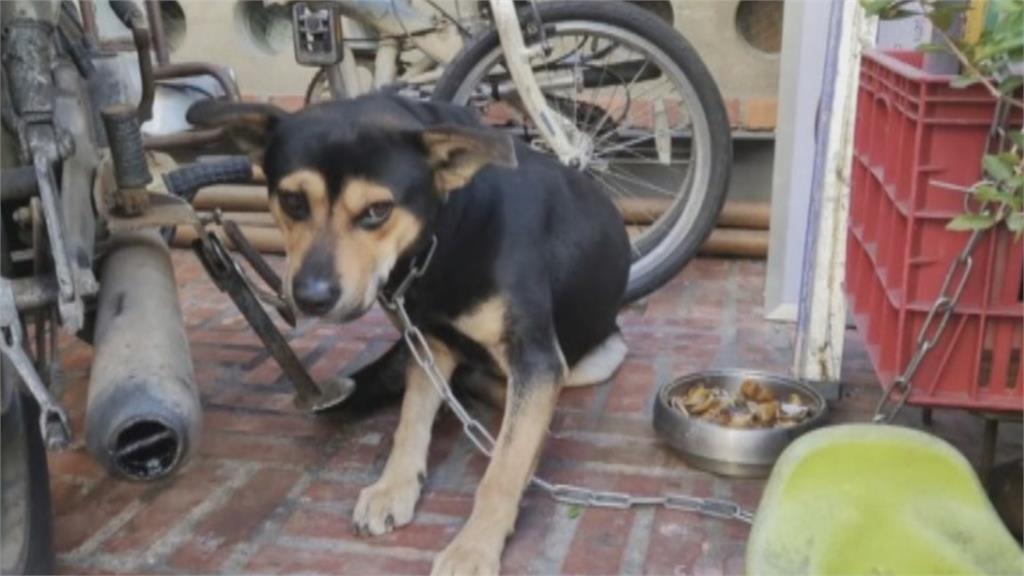 東海大學店家傳虐狗 被掐脖、騎乘檢舉數次