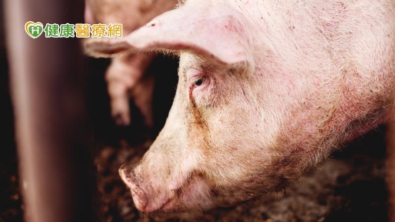 首現H1N2v流感病毒案例 常存在豬隻中