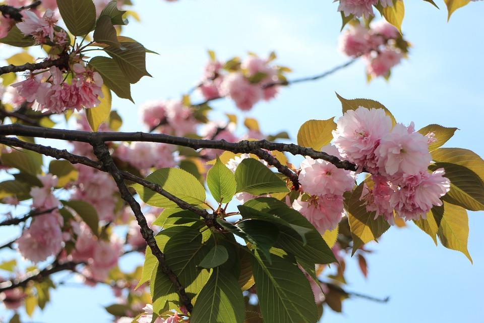 春節人潮延到清明爆發又有櫻花 上海湧現旅遊潮