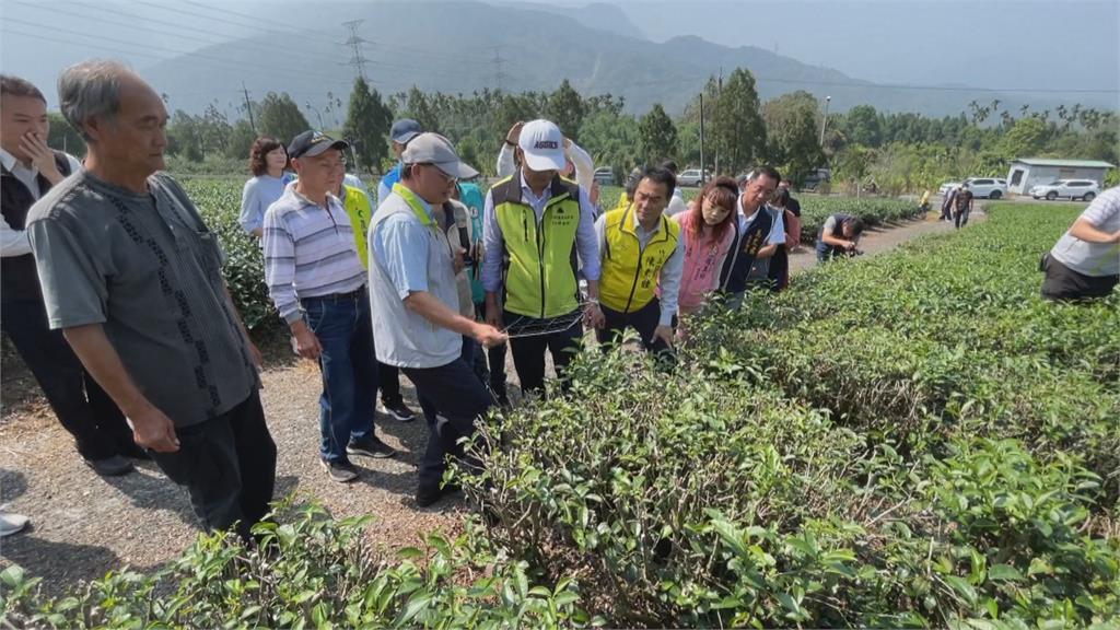 疫情影響茶葉出口 農糧署媒合飯店推茶莊之旅