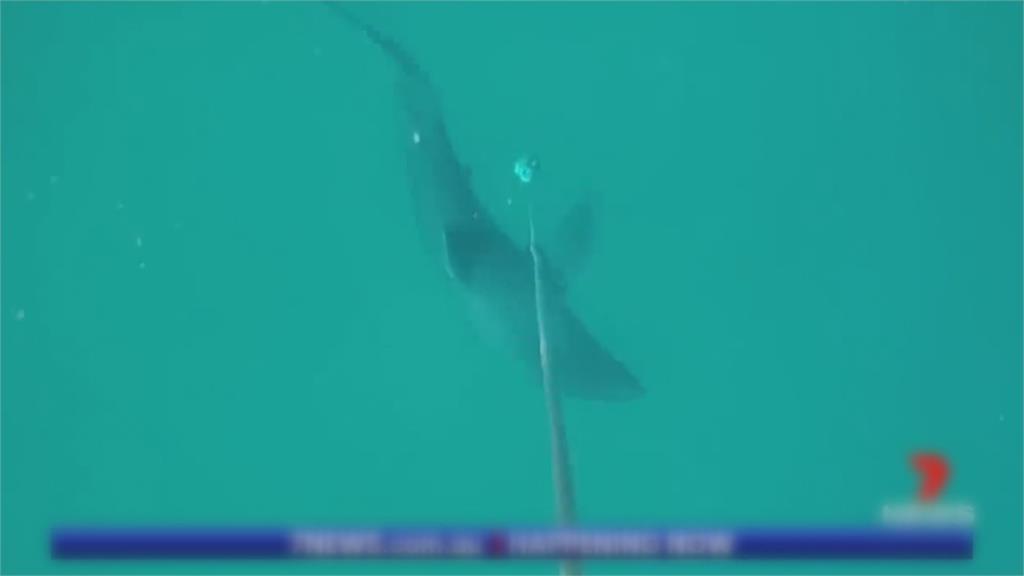 澳洲黃金海岸鯊魚襲擊 <em>衝浪</em>客左腿遭咬斷身亡