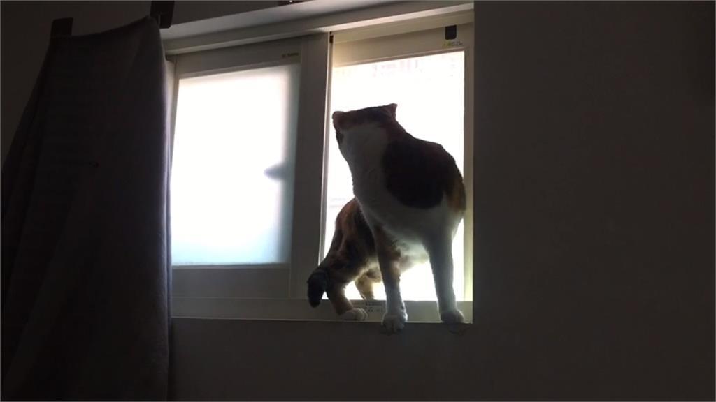 貓皇救奴才!女子洗澡完僅包浴巾 瞧牠哈氣驚見偷窺狼