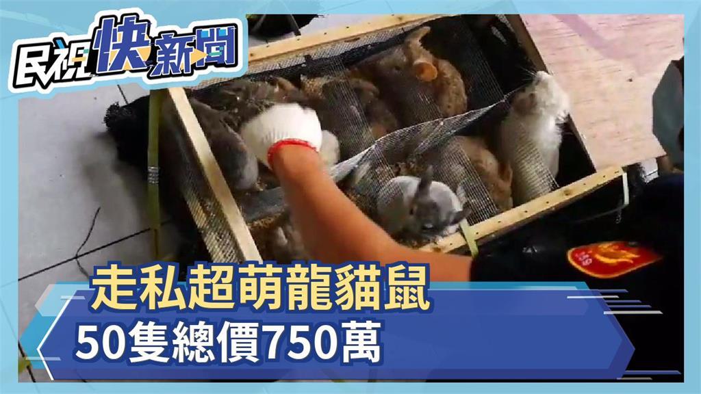 走私超萌龍貓鼠 50隻總價750萬