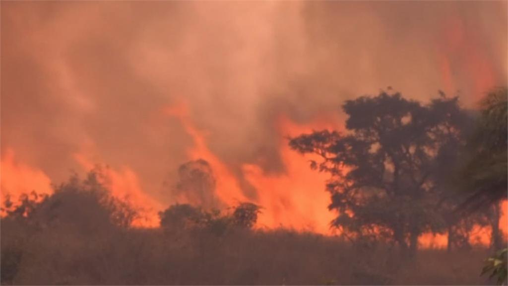 偷放天燈釀災 聖保羅州立公園逾半燒毀
