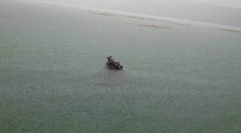 快滿了!「九蛙疊像」剩1隻半現身 日月潭差35公分滿水位