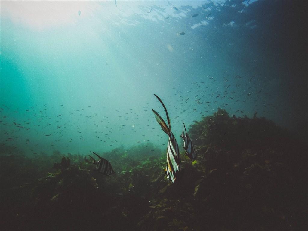 氣候變遷導致水溫變暖 赤道海洋生物朝兩極遷移