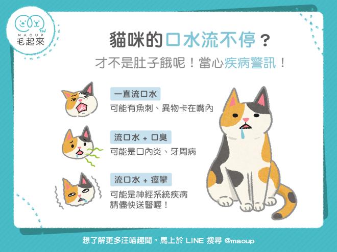 【狗貓餵養知識】貓咪的口水流不停?當心疾病警訊! 寵物愛很大