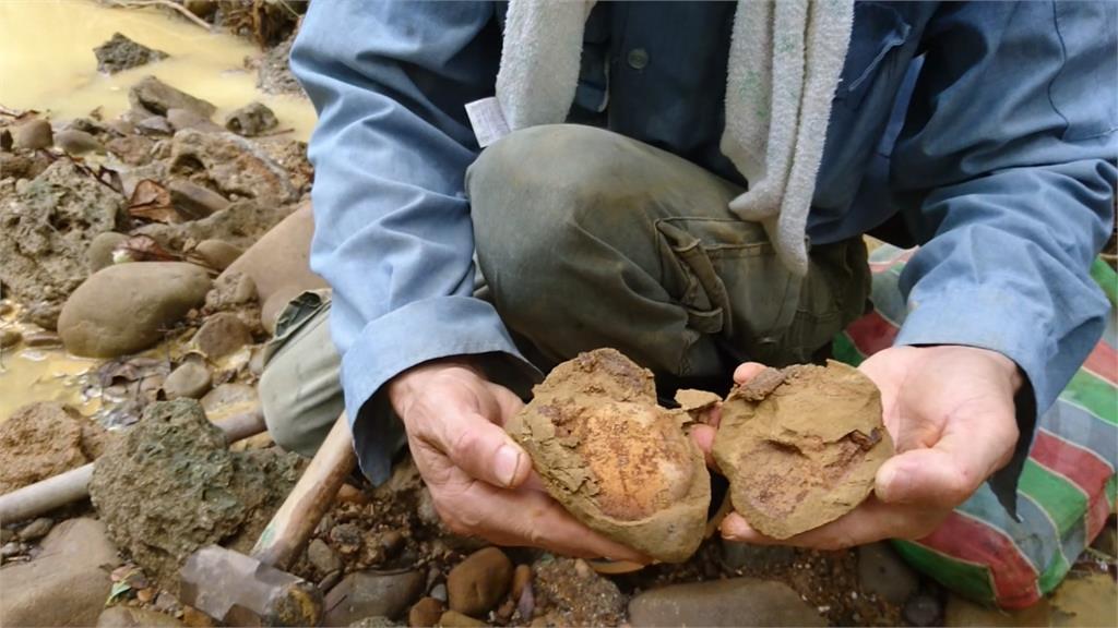 豪大雨沖刷野溪 驚見大量50萬年前化石
