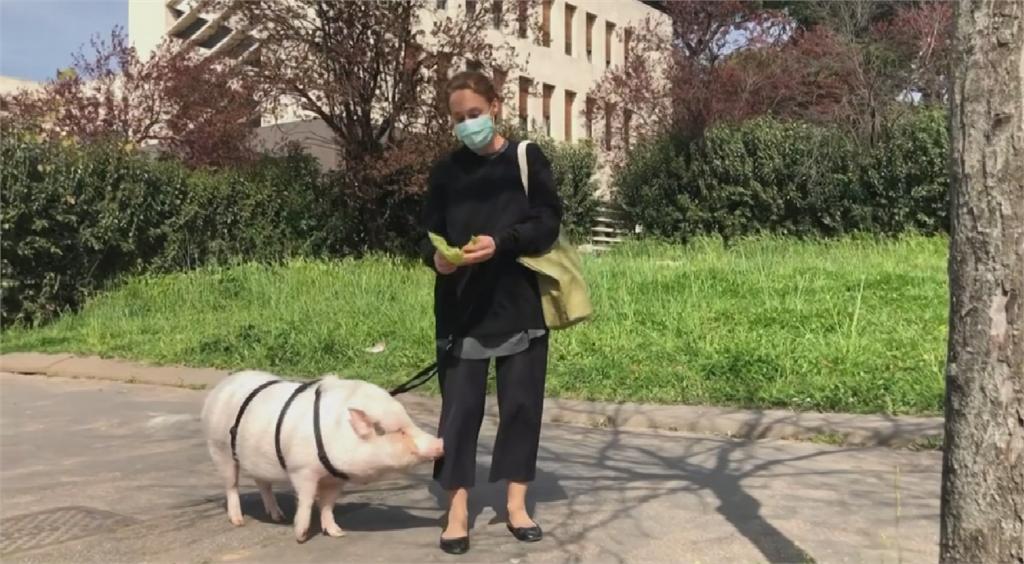 歐洲封城民眾關不住 遛狗遛豬藉機放風
