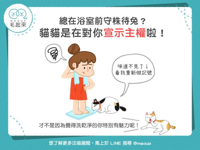 【貓貓行為學】貓咪總在浴室前守株待兔?其實是想宣示主權啦!|寵物愛很大