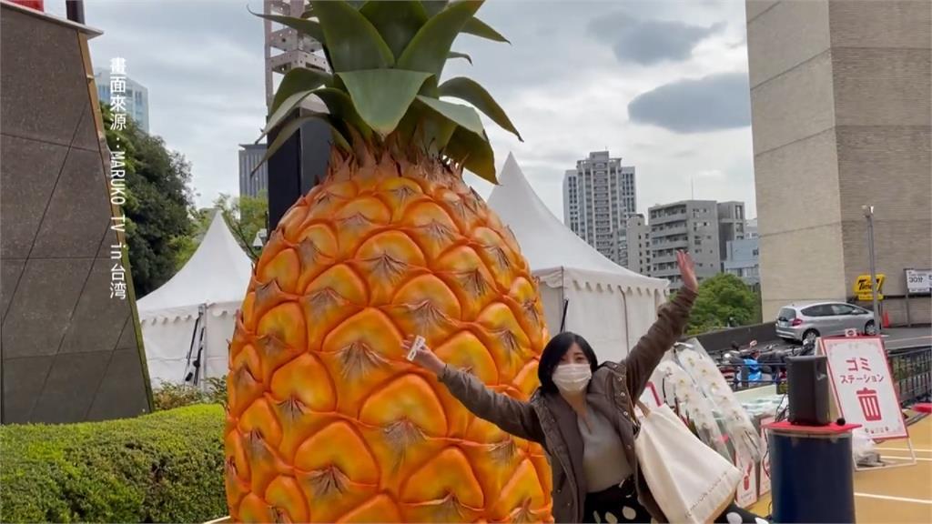 東京鐵塔變身超大鳳梨!日本台灣祭開幕