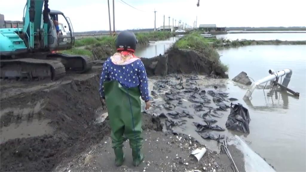 台西養殖區護岸潰堤 8公頃魚塭遭淹沒