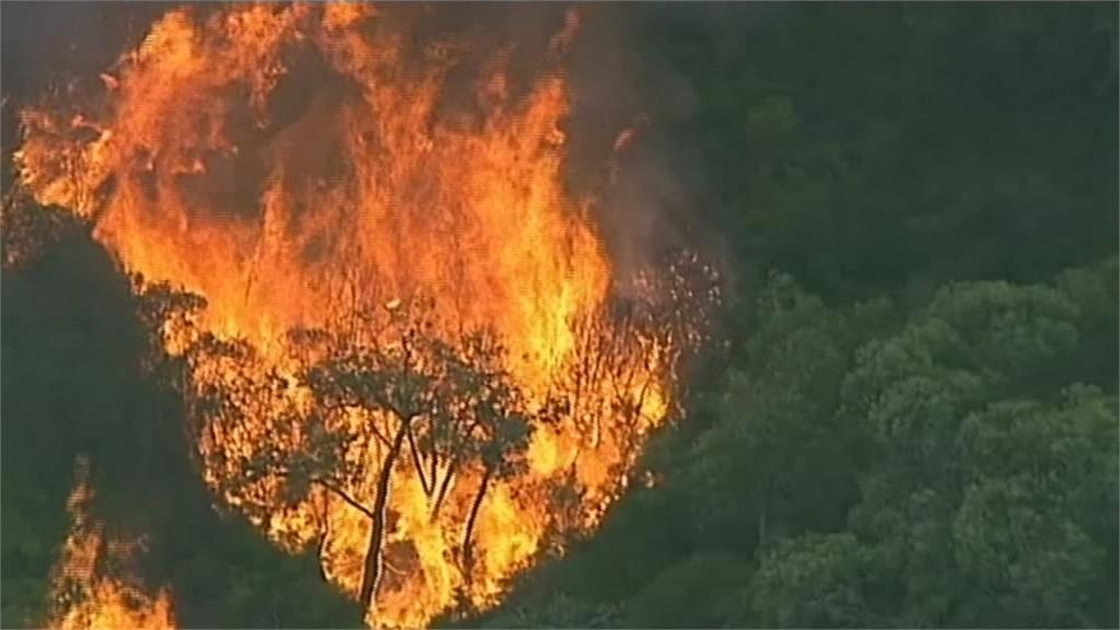 澳洲維多利亞雷擊引森林大火 當局實施禁火令