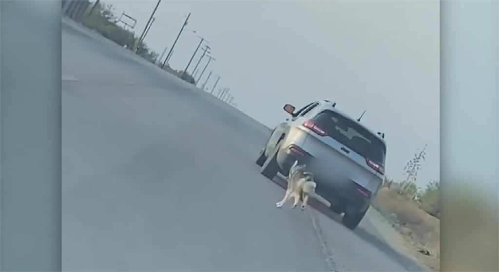 哈士奇被丟棄在德州路邊 心碎追車畫面爆紅