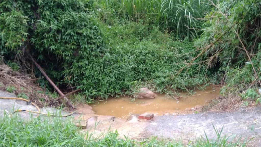 不想看魚渴死!農民接泉水救保育類「台灣白魚」