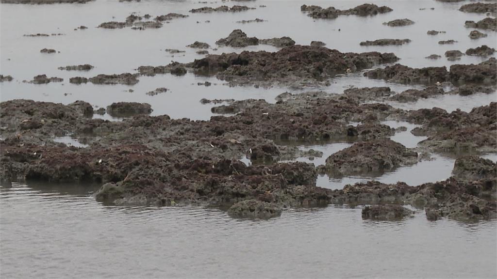 快新聞/藻礁公投連署過門檻 中油籲各界支持第三接收站興建