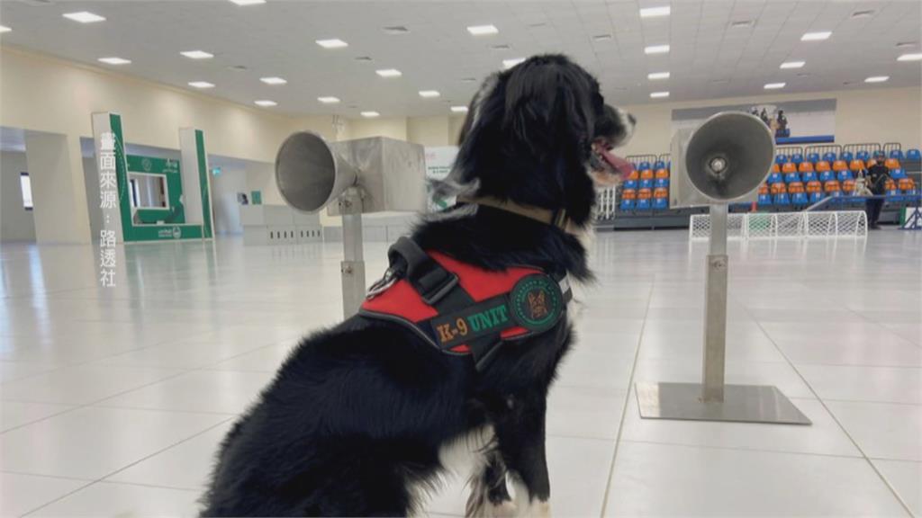不只抓毒販 杜拜機場嗅探犬「聞」出武肺確診者