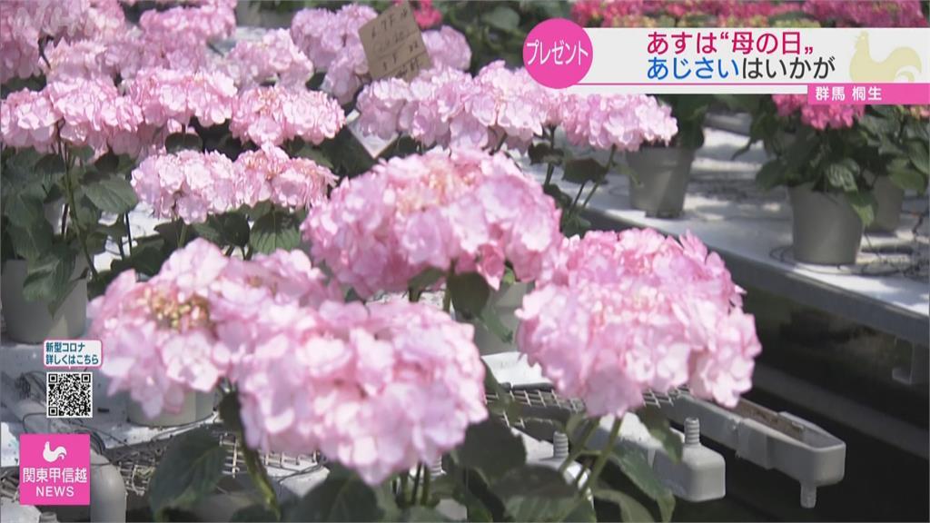 日本母親節新流行 不送<em>康乃馨</em>改送繡球花