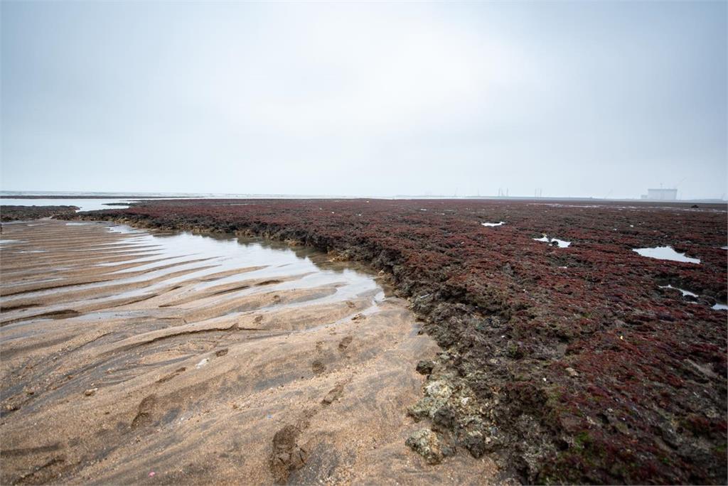 快新聞/「保育藻礁」和「非核減煤」陷兩難 鄭文燦盼民眾釐清各項事實