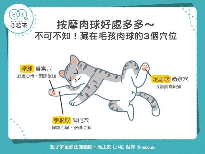 【貓狗健康】按摩肉球好處多多~不可不知!藏在毛孩肉球的3個穴位!|寵物愛很大