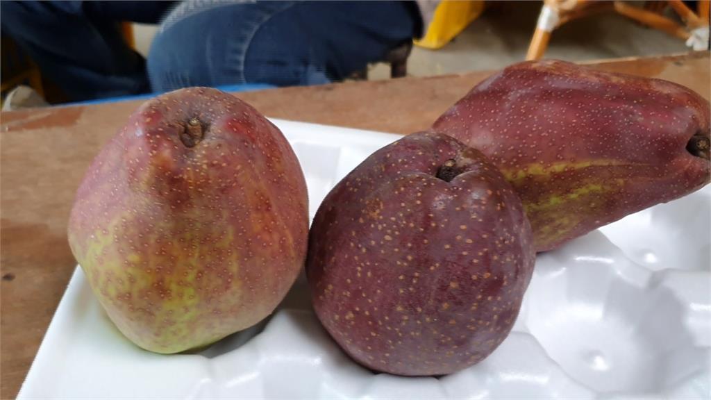 高接梨新品種!香水、紅玉甜蜜上市