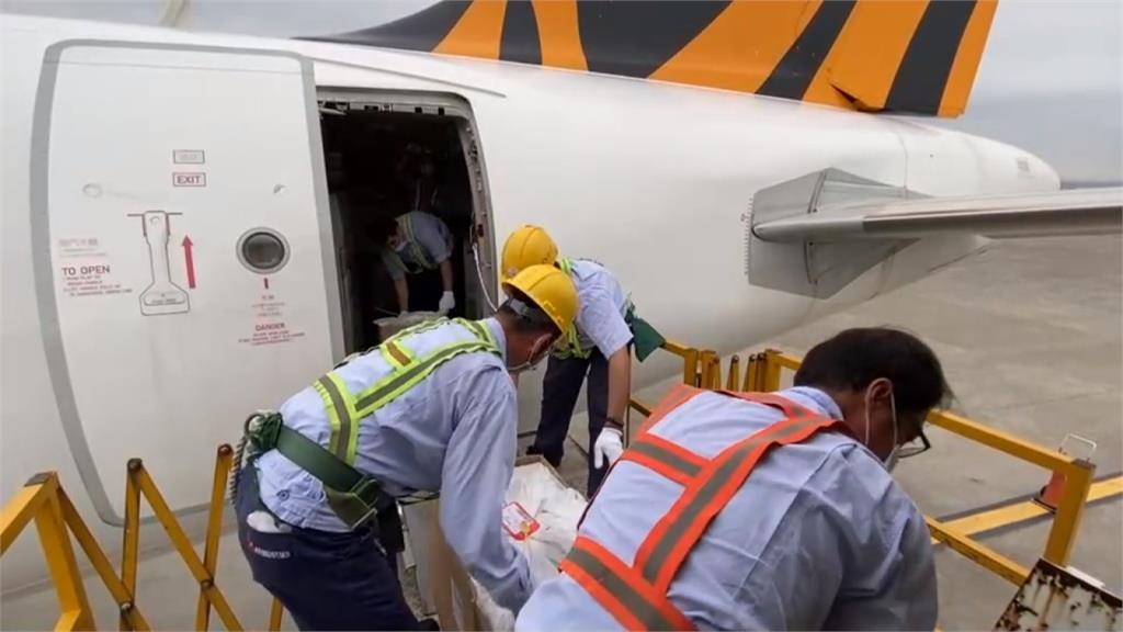疫情影響旅客大減 台灣虎航申請客艙載貨