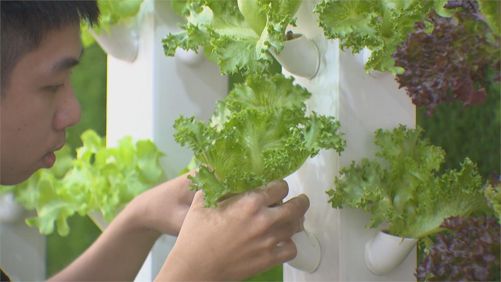 無土栽培最新重大突破!電漿技術轉氮肥「植物頭好壯壯」