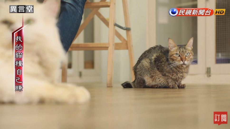 異言堂/「我的貓糧自己賺!」 貓咪中途之家的故事