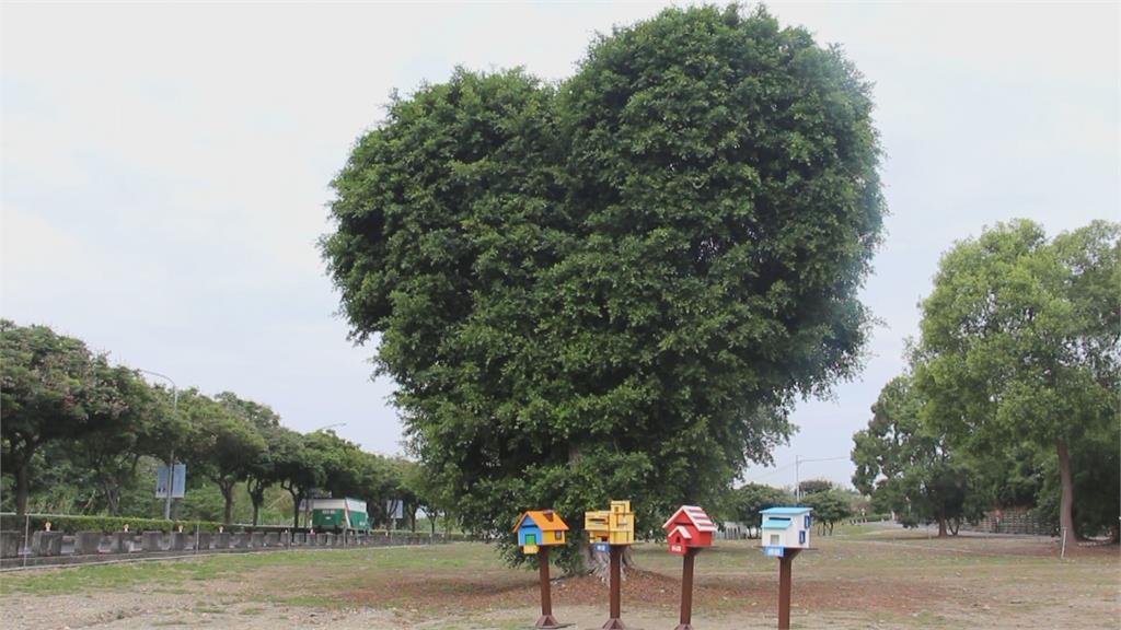大葉大學愛心樹「打卡熱點」 打電話給媽媽大聲說愛