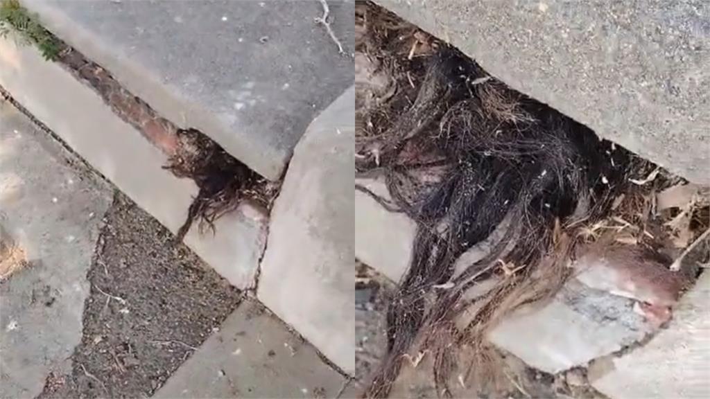 百年墳墓突竄「人類長髮」隔天竟離奇消失!詭異影片網瘋傳