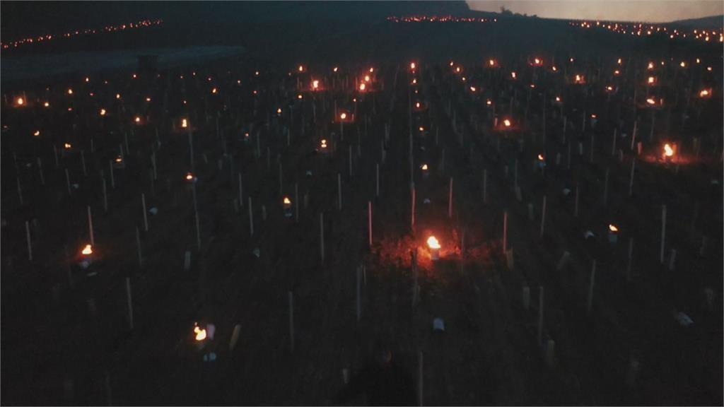 負5度春寒恐影響葡萄產量 法農民點數百支蠟燭除霜