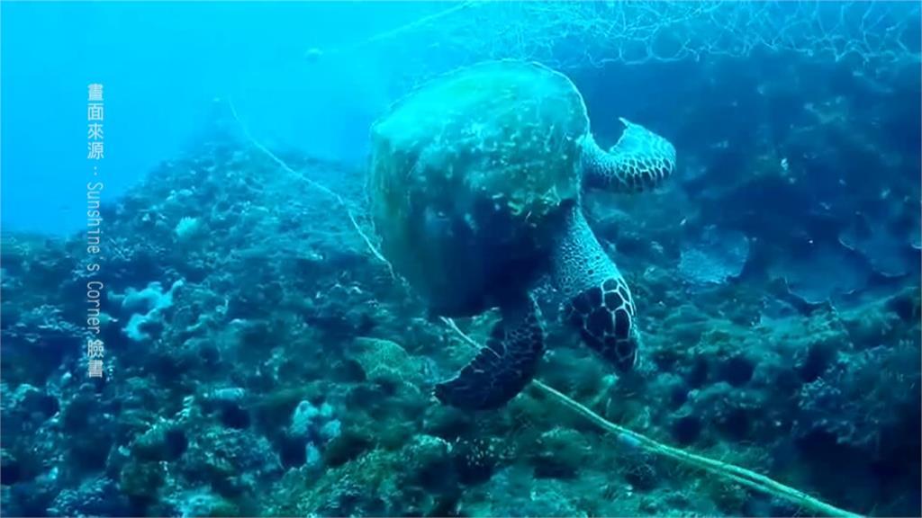 海龜慘遭漁網纏繞致死!潛水地違規擺流刺網成安全隱憂