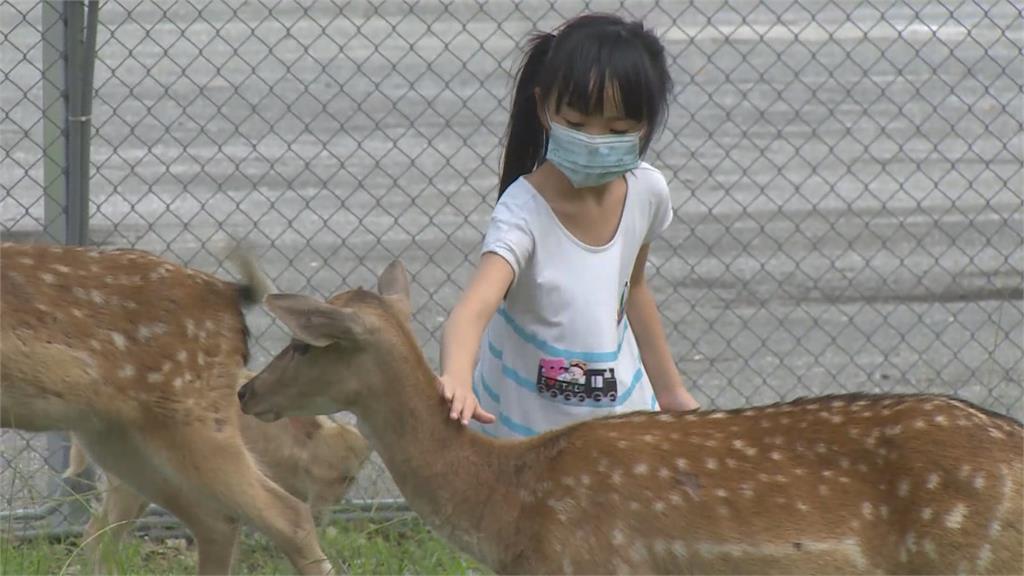 台版「奈良」在台東! 成群梅花鹿漫步公園