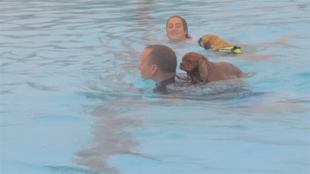 詮釋標準「狗爬式」 英國泳池首度舉辦狗狗游泳課
