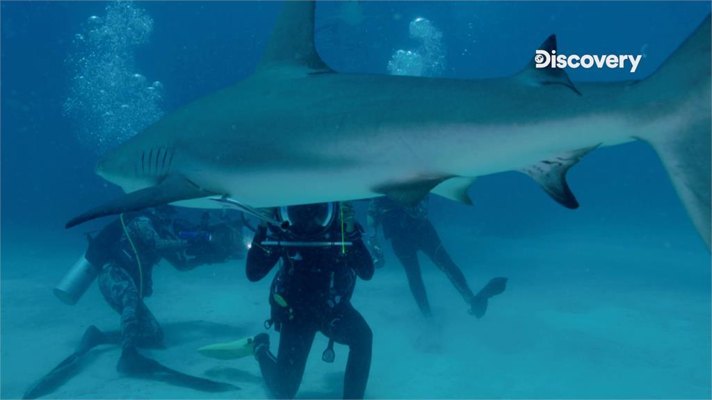 揭海洋霸主真實面目!《鯊魚週》公開鯊魚的連結秘密 生態平衡不能沒有牠