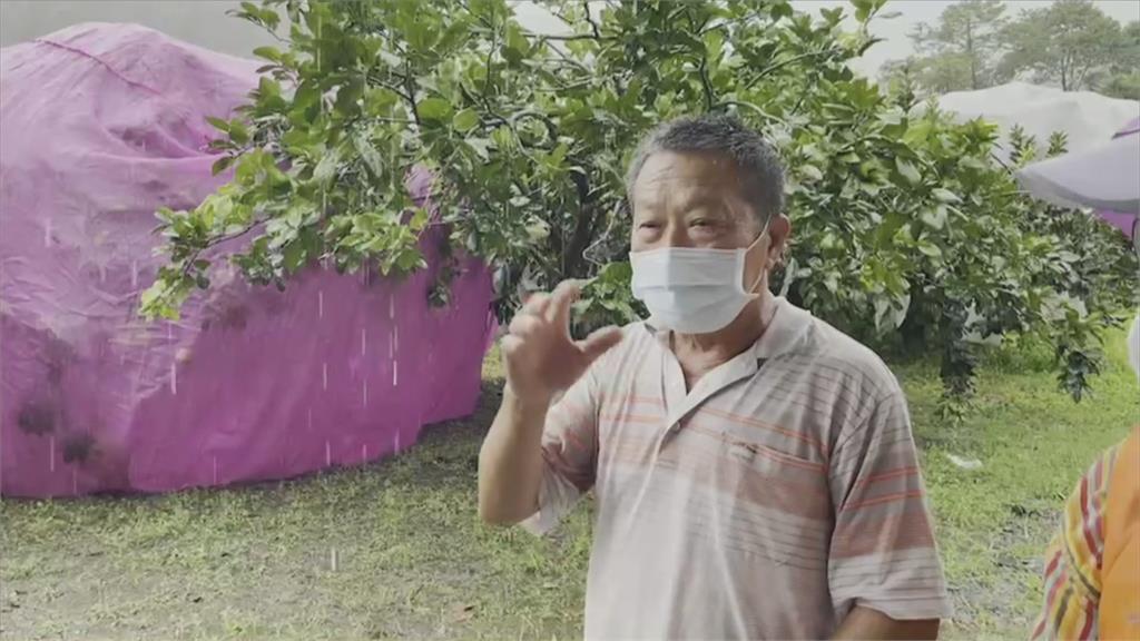 台東刮強風「700棵香蕉樹全倒光」 農民整年心血全沒了