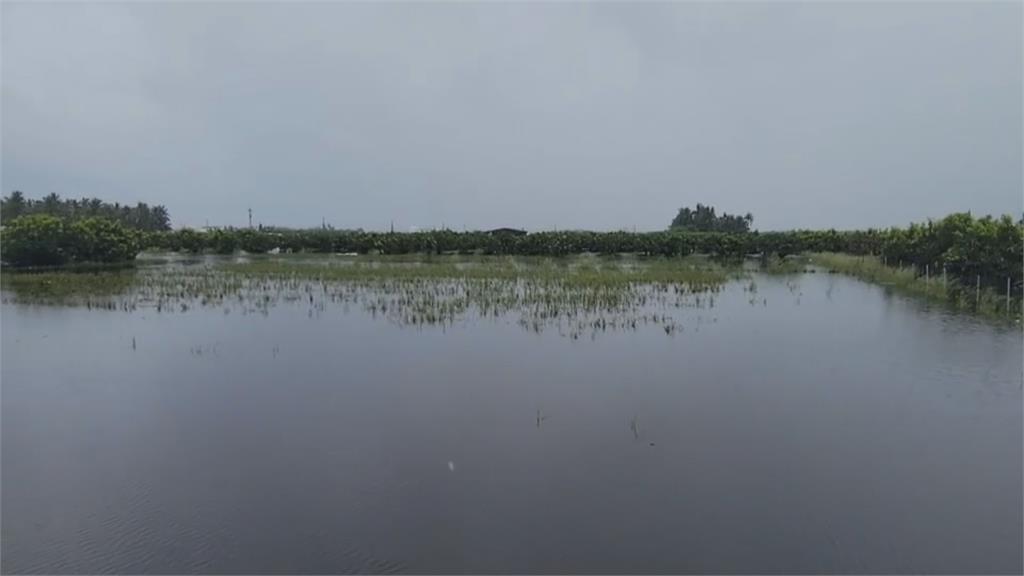 林邊積水不退「淹習慣了」 蓮霧農嘆:至少半個月才會退