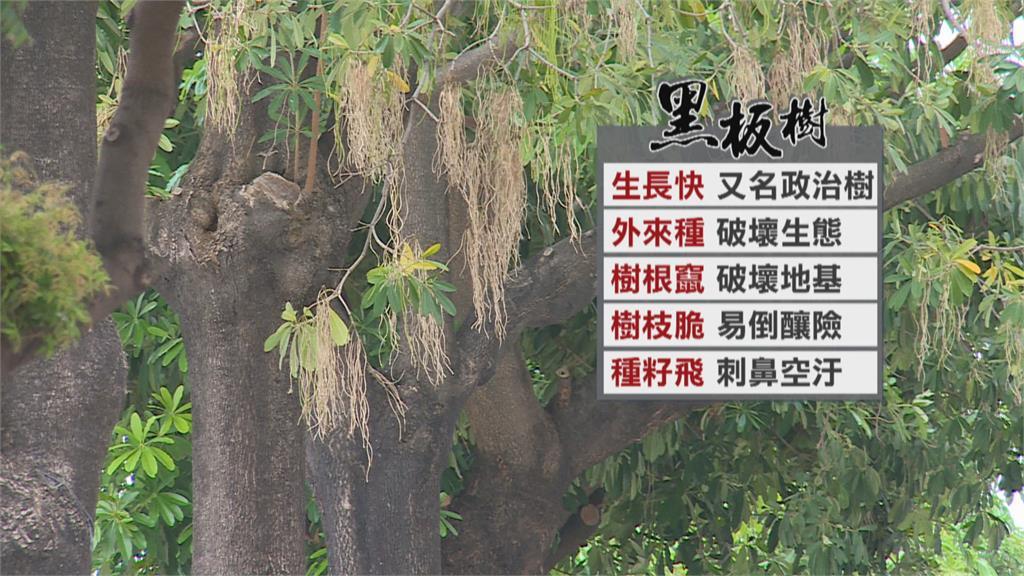 學校要種什麼樹? 蘇貞昌考倒眾人