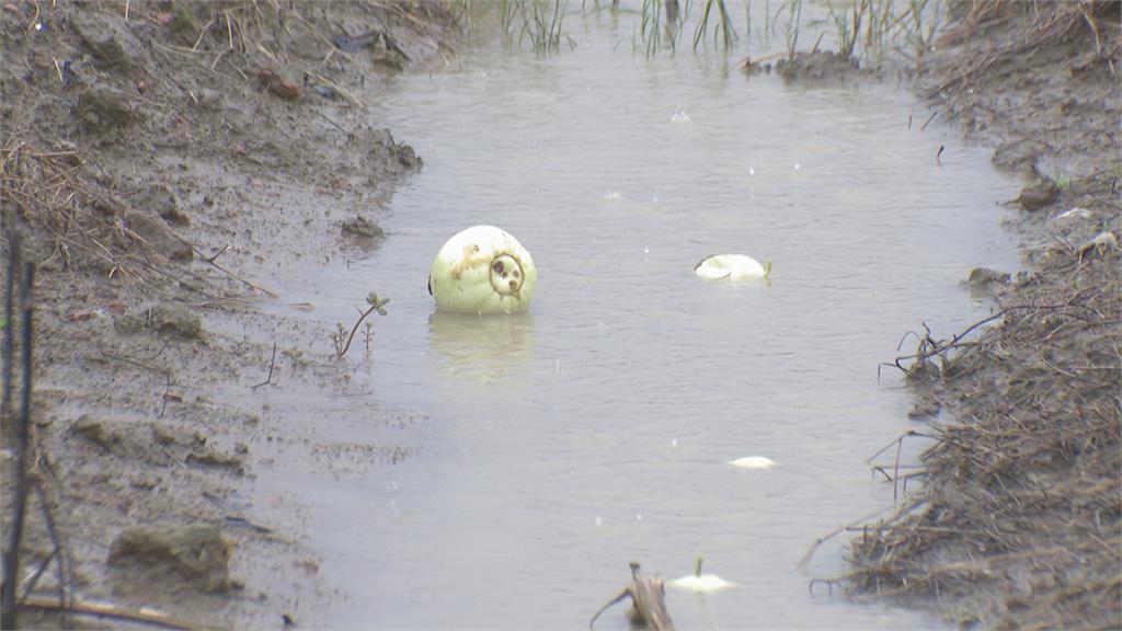 豪雨狂炸岡山十甲香瓜泡湯 哭了...損失超過150萬